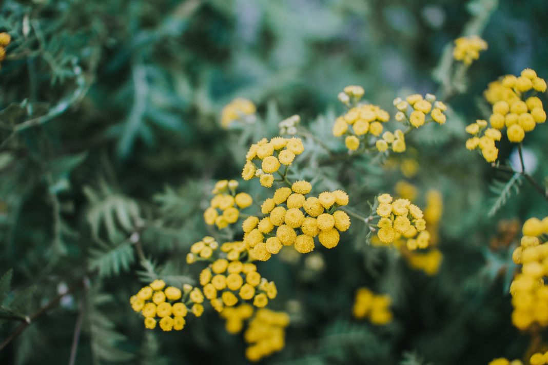 selective focus photo of yellow petaled flowers